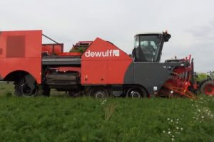 Veja Como Se Processa a Apanha Da Cenoura Com Esta Incrível Máquina Agrícola 7