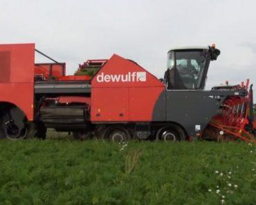 Veja Como Se Processa a Apanha Da Cenoura Com Esta Incrível Máquina Agrícola 4