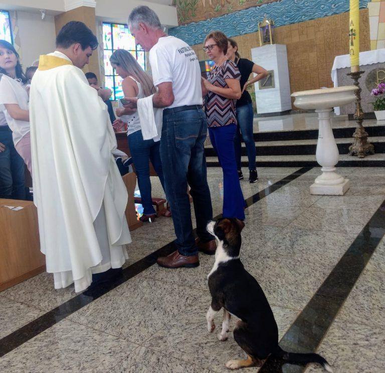 Cão Assiste à Missa Até Ao Fim… à Espera Da Hóstia 1