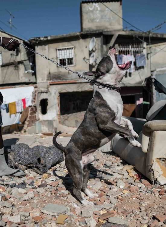 Fotógrafo Capta Imagens Da Vida Que Resta No Bairro Clandestino 6 De Maio Na Amadora 4