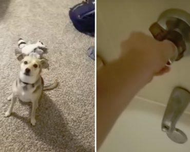 Cão Desaparece Como Por Magia Quando Percebe Que Está Na Hora Do Banho 7