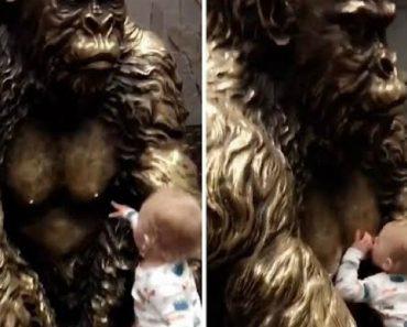Inocente Bebé Tenta Mamar No Peito De Estátua De Gorila 1