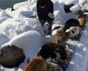 Todos Os Dias Esta Mulher Cuida De Centenas De Gatos De Rua e Nem a Neve a Impede 9
