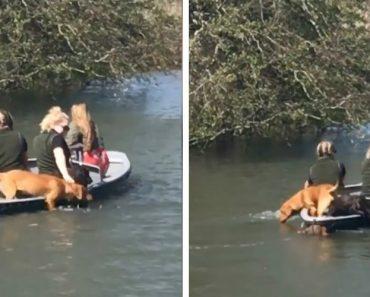 Cães Proactivos Ajudam Os Donos a Manter Barco a Remos Em Movimento 4