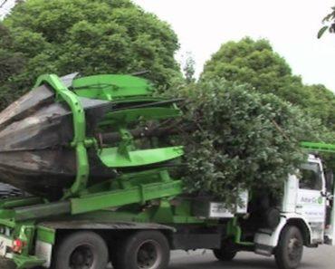 Incrível Máquina Consegue Remover Árvores Inteiras Para Que Sejam Colocadas Noutro Lugar 5
