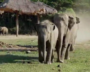 Esta é a Reação Que Os Elefantes Têm Quando Veem o Seu Tratador Favorito 8