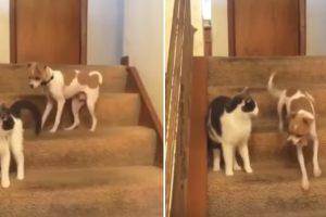 """Gato Acidentalmente Ativa """"Turbo"""" De Cão 9"""