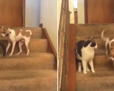 """Gato Acidentalmente Ativa """"Turbo"""" De Cão 5"""