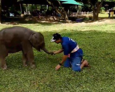 Momentos Divertidos Entre Jovem Elefante e Tratador Mostram a Cumplicidade Que Existe Entre Os Dois 6