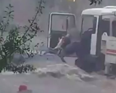 Corajoso Camionista Arrisca a Vida Para Salvar 1 Cão, 1 Gato e 1 Pessoa De Enxurrada 7