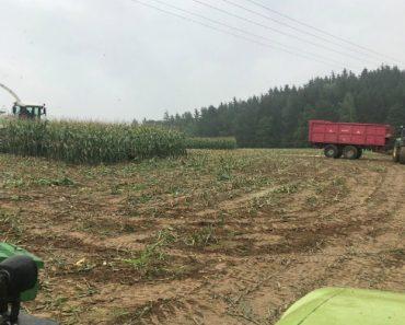 Agricultor Pensava Que Só Ia Encontrar Milho Na Sua Plantação Mas Encontra Muito Mais Do Que Esperava 2