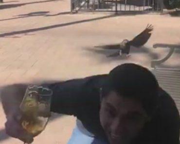 Homem Falha Ao Tentar Fugir Do Ataque De Pássaro Enquanto Está Ao Telemóvel e Segura Uma Bebida 2