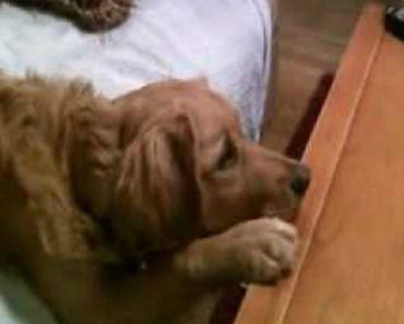 Quando o Dono Percebeu o Que o Seu Cão Estava a Fazer, Ele Teve De Filmar 9