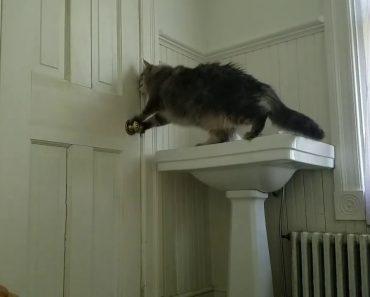 Dono Coloca Câmara a Filmar e Descobre Como o Seu Gato Consegue Abrir As Portas 1