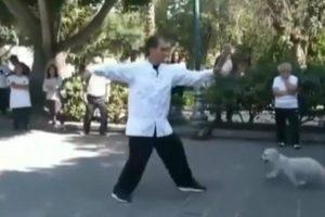 Imperturbável Mestre De Tai Chi Não Se Deixa Distrair Por Nada Nem Ninguém 9