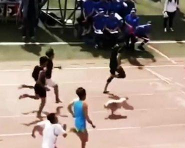 Cão De Rua Quase Vence Prova De Atletismo Ao Juntar-se à Corrida 4