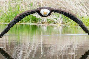 Esta Fotografia Simétrica De Uma Águia Americana Está a Conquistar a Internet 9