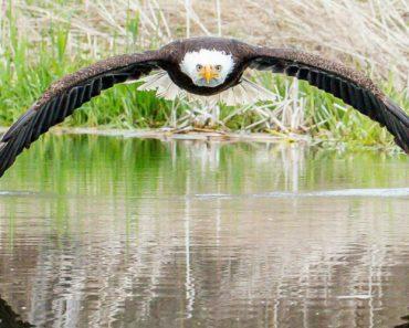 Esta Fotografia Simétrica De Uma Águia Americana Está a Conquistar a Internet 6