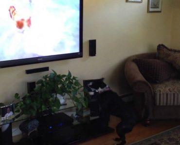 Cão Tem Reação Hilariante Ao Ver o Seu Programa De Cães Favorito 3