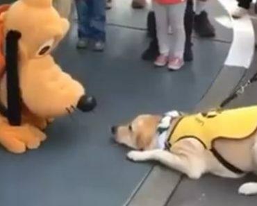 Cão Guia Fica Eufórico Ao Conhecer Pluto Na Disneylândia 8