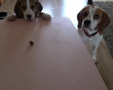 Cãozinho Tão Esforçado Mas Com Tão Pouca Sorte 3