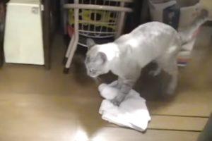 Este Gato Não é Só Um Animal De Estimação, Ele Também Gosta De Ajudar Na Limpeza Da Casa! 11