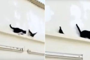 Gato Comete o Erro De Tentar Atacar Pássaro Sem Fazer o Devido Planeamento 8