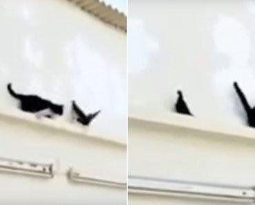 Gato Comete o Erro De Tentar Atacar Pássaro Sem Fazer o Devido Planeamento 1
