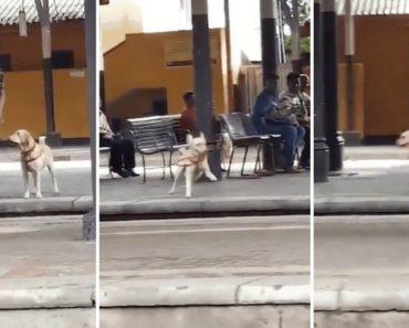 """Quando Um Cão """"Militar"""" Pede Permissão Para Brincar e Esta é-lhe Concedida 1"""