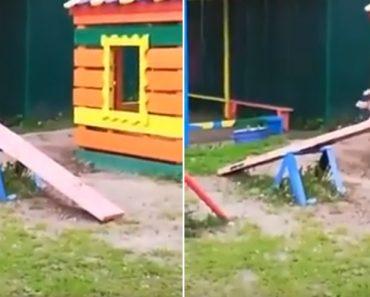 Pássaro Descobre Como Se Divertir Sozinho Em Parque Infantil 3