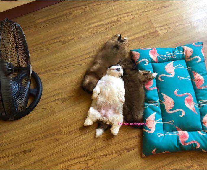 """Cãozinho Dorme Como Se Tivesse Sido """"Desligado""""… e Isso é Tão Fofo! 13"""