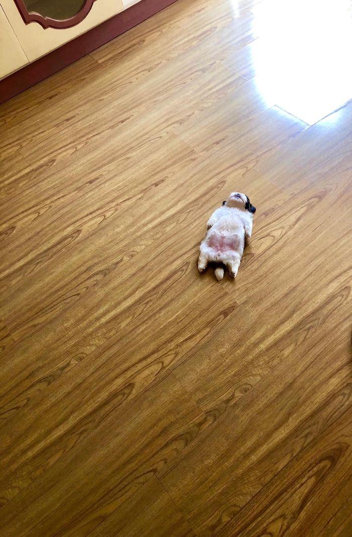 """Cãozinho Dorme Como Se Tivesse Sido """"Desligado""""… e Isso é Tão Fofo! 1"""