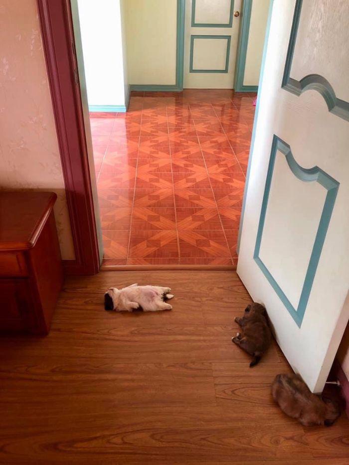 """Cãozinho Dorme Como Se Tivesse Sido """"Desligado""""… e Isso é Tão Fofo! 5"""