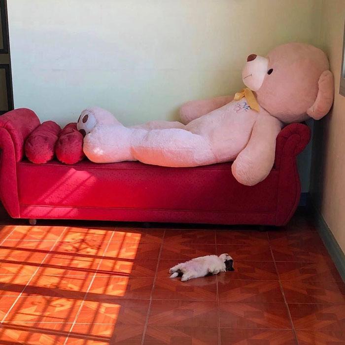 """Cãozinho Dorme Como Se Tivesse Sido """"Desligado""""… e Isso é Tão Fofo! 7"""