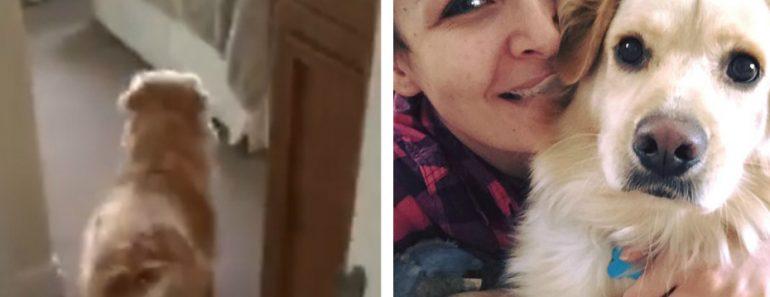 Cão Tem Emocionante Reencontro Com a Sua Dona Depois De Estarem Sete Meses Separados 1