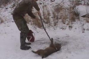 caçadores
