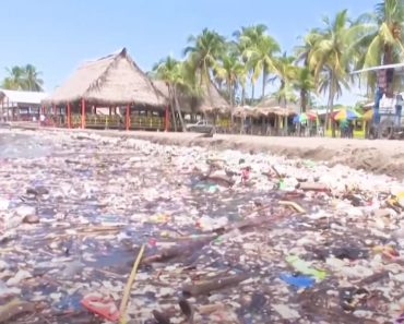 Tsunami De Lixo