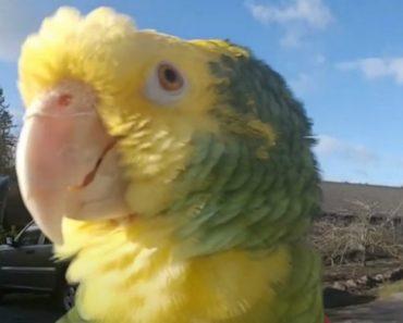 Chick E Poo