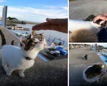 Ilha dos Gatos